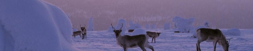 InterVisit Scandinavia - Sapmi